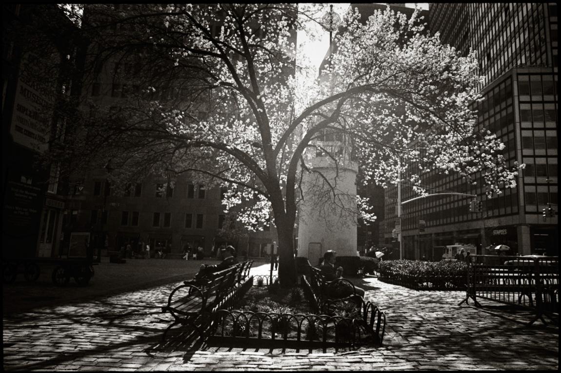 Spring NYC  by Strazza