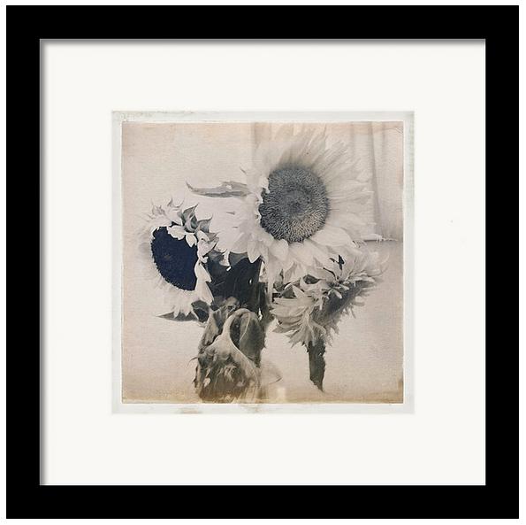 Sunflower iPhone image by John Strazza