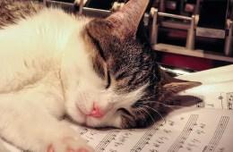 cat-2856353_640