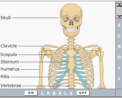 human-anatomy-getbodysmart-tn