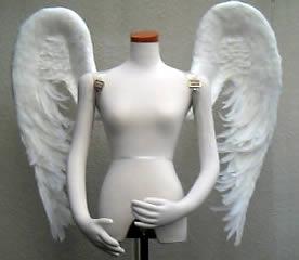 wing053