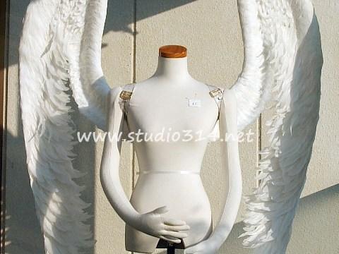 wing061