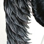wing076-up