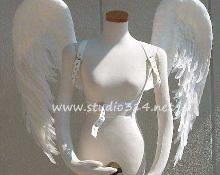 wing079