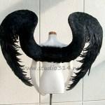 wing081-b