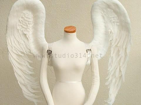 wing083-f