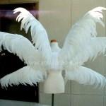 wing084-b2