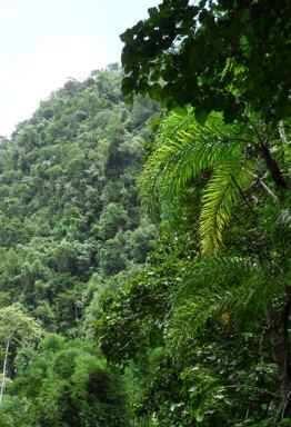 Amazon Rainforest Saved by Internet
