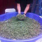 kidde pool of weed