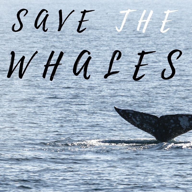 Save The Whales Relay Stumingames