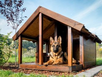 """Dog House saved from stateman.com, credit given to """"Contributed."""""""