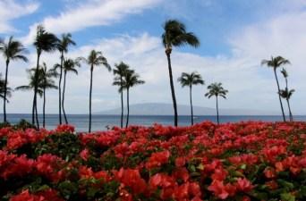 hyatt-regency-maui-resort-and-spa-review-13