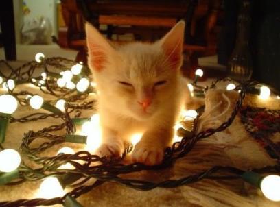 Kittens make every post 1000% better. True fact.