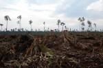 WWF: Deklarasi Ekspor Langkah MundurPenerapanSistem Legalitas Kayu