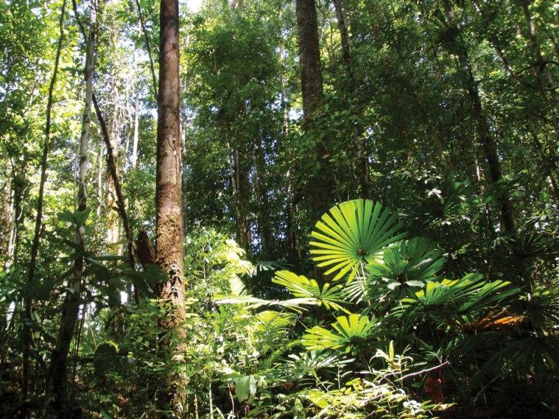 primary_lowland_forest_murung_raya