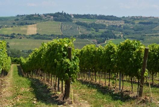 Wine growing regions