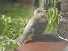 Mini-Vogel auf der Fensterbank