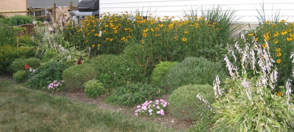 east-side-perennials-in-july-21
