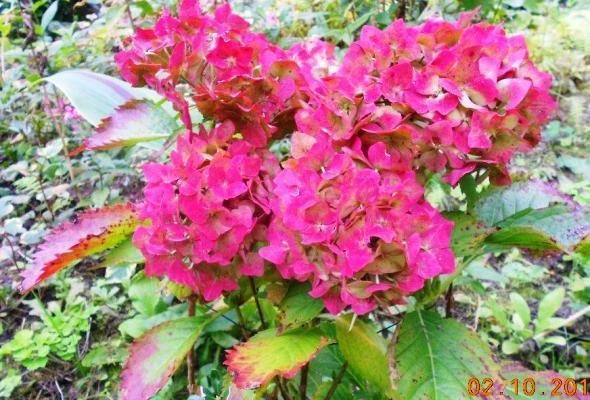 autumn-flowers-12