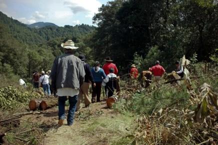 Continúa ecocidio en bosque de agua  #AlertaXochicuautla
