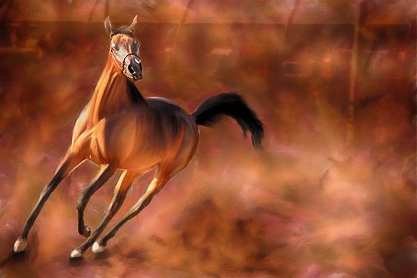 arabian horse stephen moody