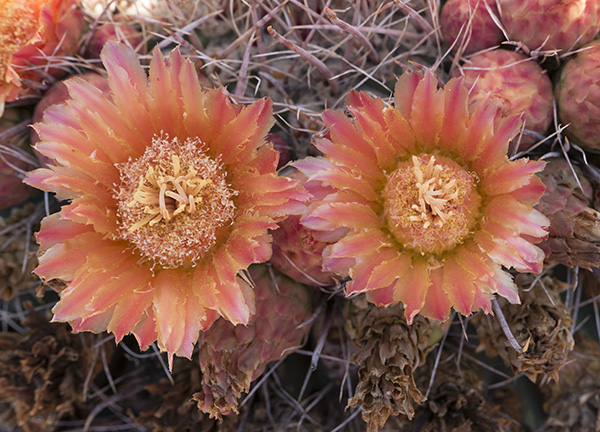 full shade cactus image