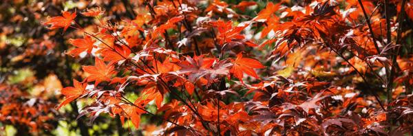 red butte arboretum panorama photo
