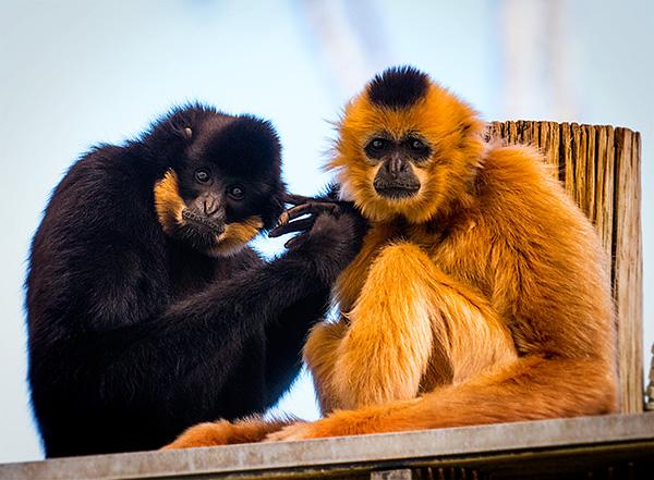 phoenix zoo primates