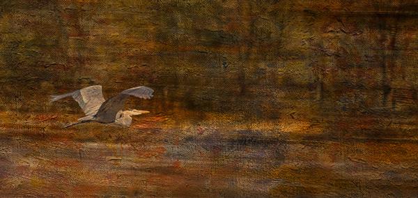 heron in flight art image
