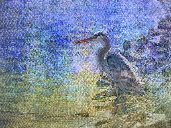 heron art bob coates photography