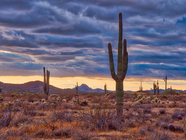 cactus photo dodge and burn