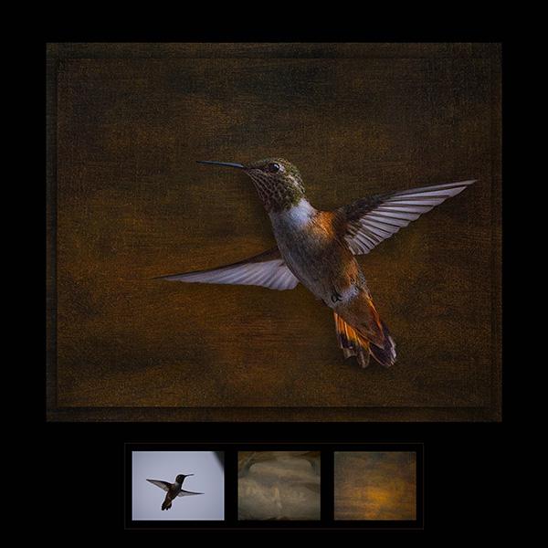 humminbird art