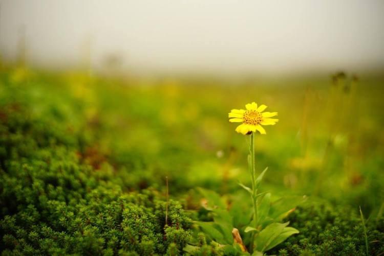 Alpine flowersを見に行こう!