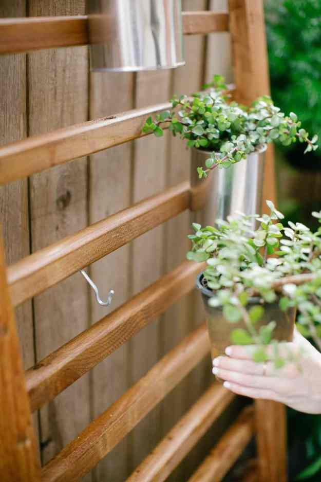 Diy Outdoor Succulent Wall Accent