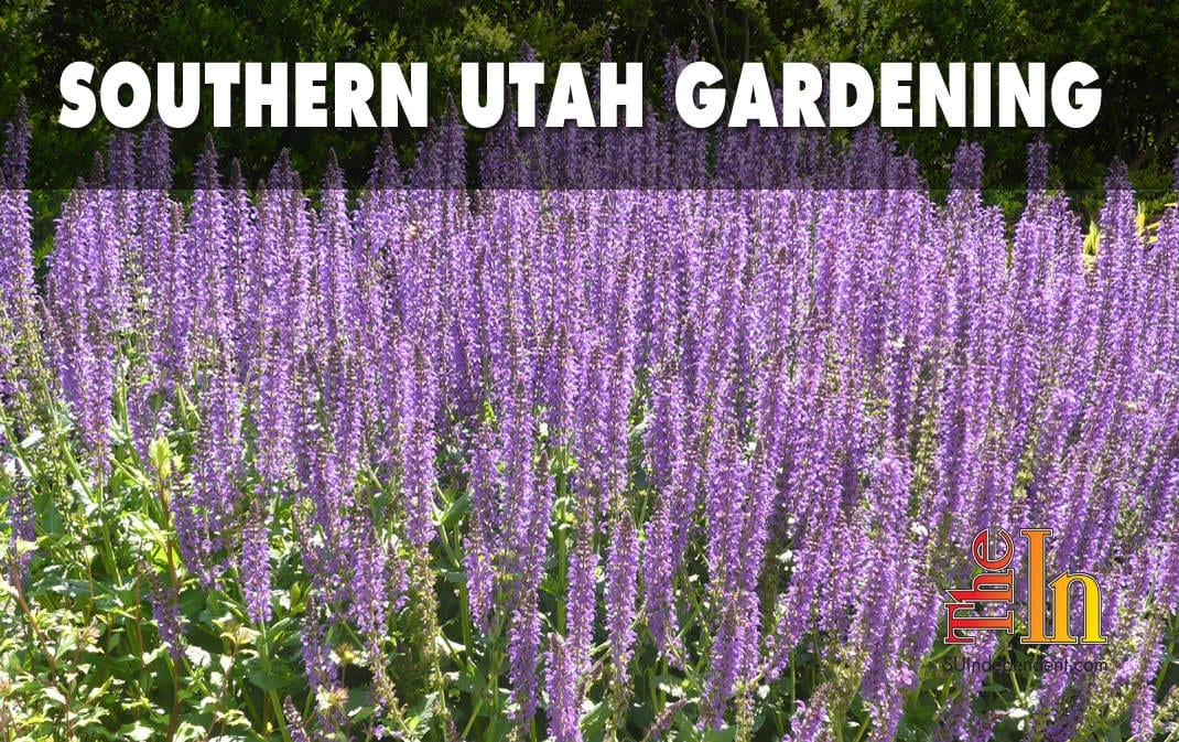 southern Utah gardening container gardens