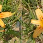 Xperia XZ Premium vs HTC U 11カメラ比較、日中屋外ではHTC U 11が優秀か