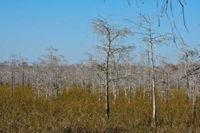 Big Cypress Fields