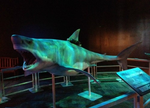 Great white shark model at Arizona Science Center Earth Explorers exhibit