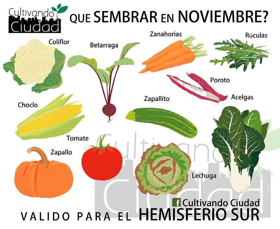 La huerta en noviembre qu sembrar supercampo - Que plantar en el huerto ...