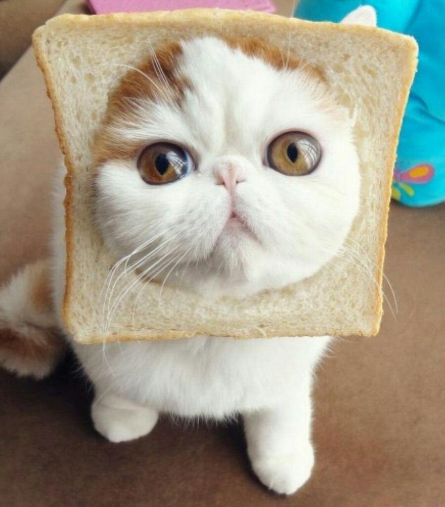 famous-internet-cats-181