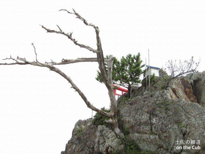 枯れた木が何かを物語っている
