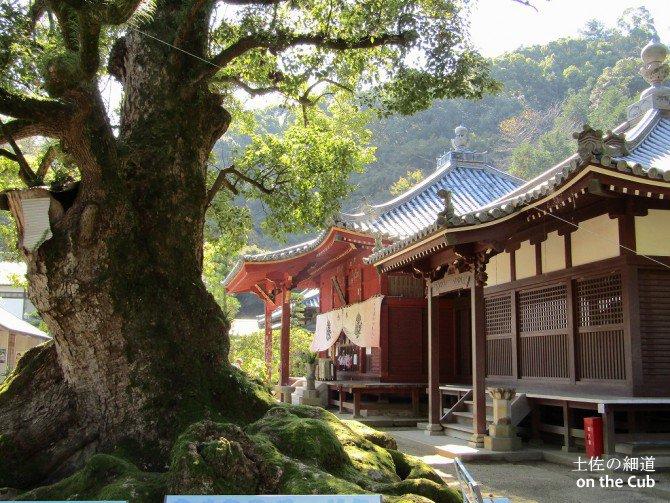 神恵院&観音寺、楽しめました