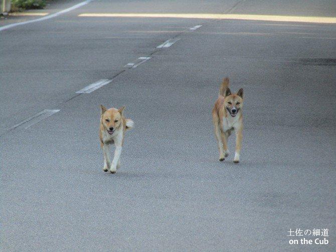 ややや野犬ですぅ!!!