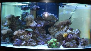 aquarium glass and acrylic with our patented scratch repair services