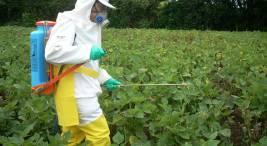 Costa Rica sera sede de debate mundial sobre plaguicidas