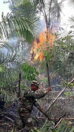 Incendios forestales devastan Reserva Biologica Indio Maiz2