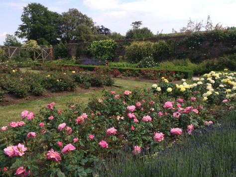 Polesden Lacey rose garden