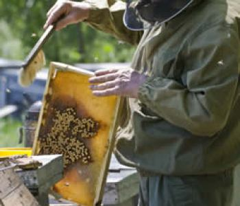 Beekeeping for Homesteaders and Preppers