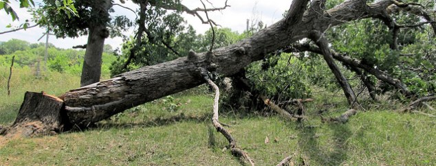 Why You Shouldn't Remove A Dead Tree Yourself