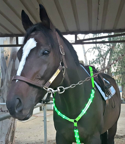 High Visibility Horse Breastplate by Illumiseen Product Review